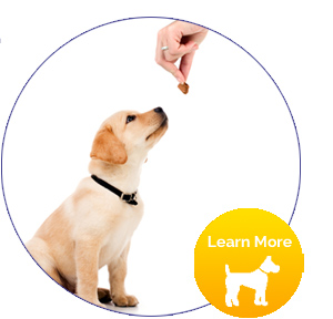 [CTA-learn-more]