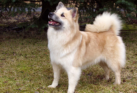 right breed for you the breed is extremely social loving and patient ...