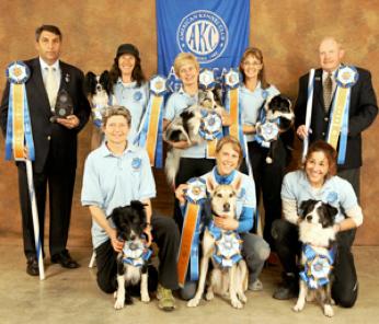 AKC Agility Champions