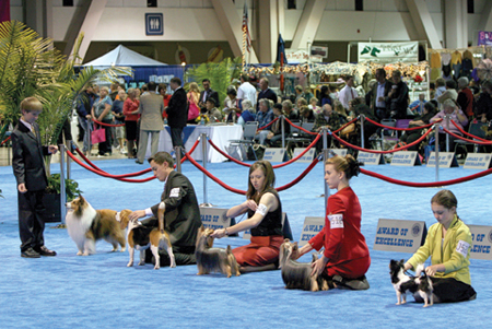 AKC Juniors at AKC Eukanuba National Championship