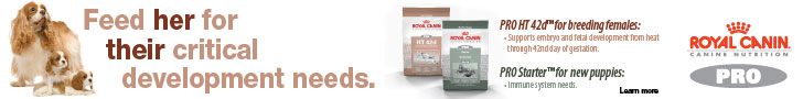 Royal Canin: Feed her for their critical development needs.