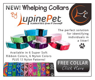 New whelping collars from Lupine Pet. Free collar -- Click Here!