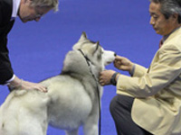 AKC Group Honorees
