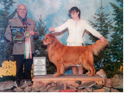 Lauren Texter showing a Golden Retriever