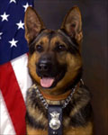 Law Enforcement Dog: Rex