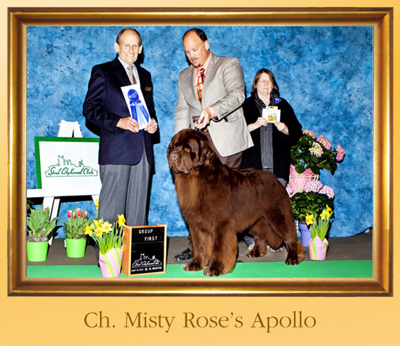 how to become an akc judge