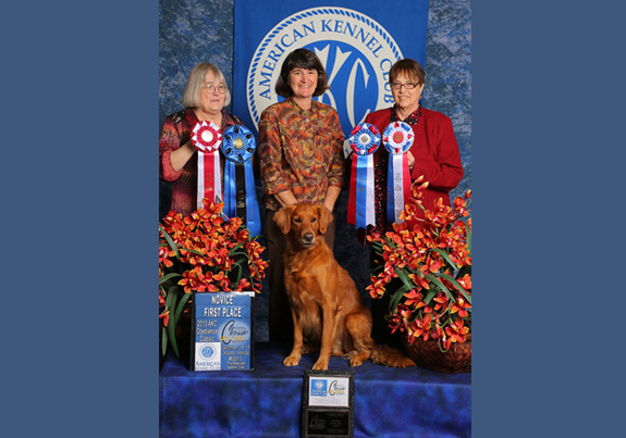 EOY2012pix Obedience