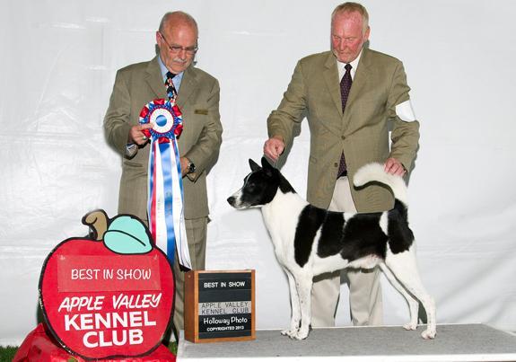 Robert Caswell Dog Show Judge
