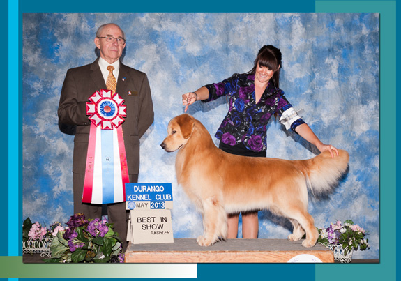 The Weekly Winners Gallery from The AKC