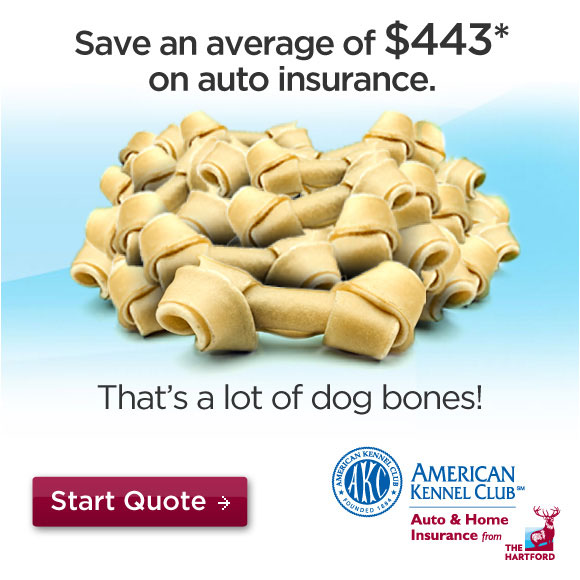 Save an average of $443 on auto insurance with The Hartford. Start your quote.