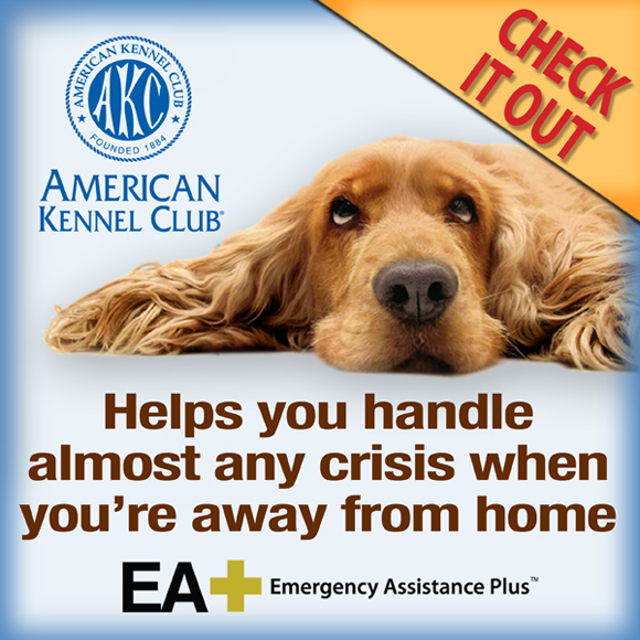 EA Plus. Helps you handle almost any crisis when you're away from home.