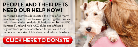 Click here to donate to the Sandy Fund to help Pets and their owners.