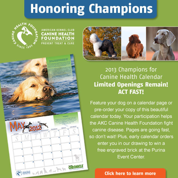 2013 Champions Canine Health Calendar. Limited supply. Act fast!