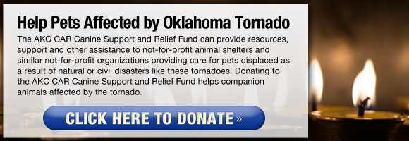 Click here to help pets affected by the Oklahoma Tornado.