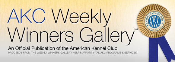 AKC Weekly Winners Gallery