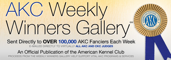 AKC Weekly Winners Gallery - Send Directly to Over 100,000 AKC Fanciers Each Week