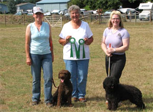 First AKC Spanish Water Dog Herding Titles Awarded
