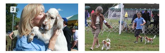 Akc Match Program American Kennel Club