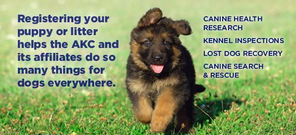 AKC Dog and Litter Registration