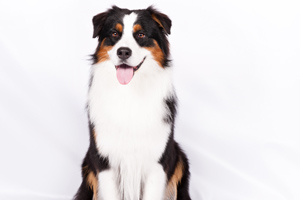 6 People-Pleasing Breeds
