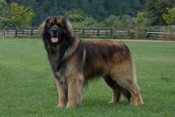 dog breeds | ohmidog!
