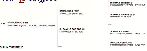 Detail section of an AKC Certified Pedigree